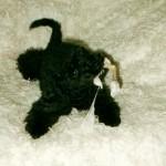 2005-02-06 Kampfpudel - Nico der Pudel im Alter von 10 Wochen im Kampf mit dem Kauknochen.