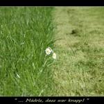 2005-04-24 Spaß im Gras