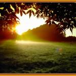 2005-11-17 Mein Sommer 2005