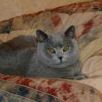 2006-02-12 Gino