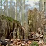 2006-04-05 Lebensraum - toter Baum