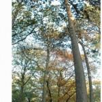 2006-11-03 Herbst