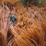 2007-01-28 ~ Nemo ~
