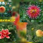 2009-02-04 Sommerpostkarte