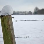 2009-02-15 Schneeköpfchen