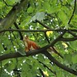 2009-03-08 Eichhörnchen im Baum