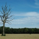 2009-07-30 Mein Freund der Baum ...