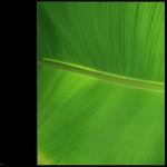 2009-09-28 grün
