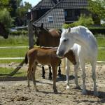 2011-07-20 Pico mit Mama Helene