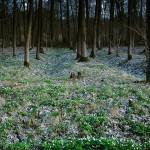 2013-04-14 Erwachen im Wald